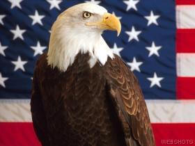 USA%20EAGLE%20AND%20FLAG%20GOOD